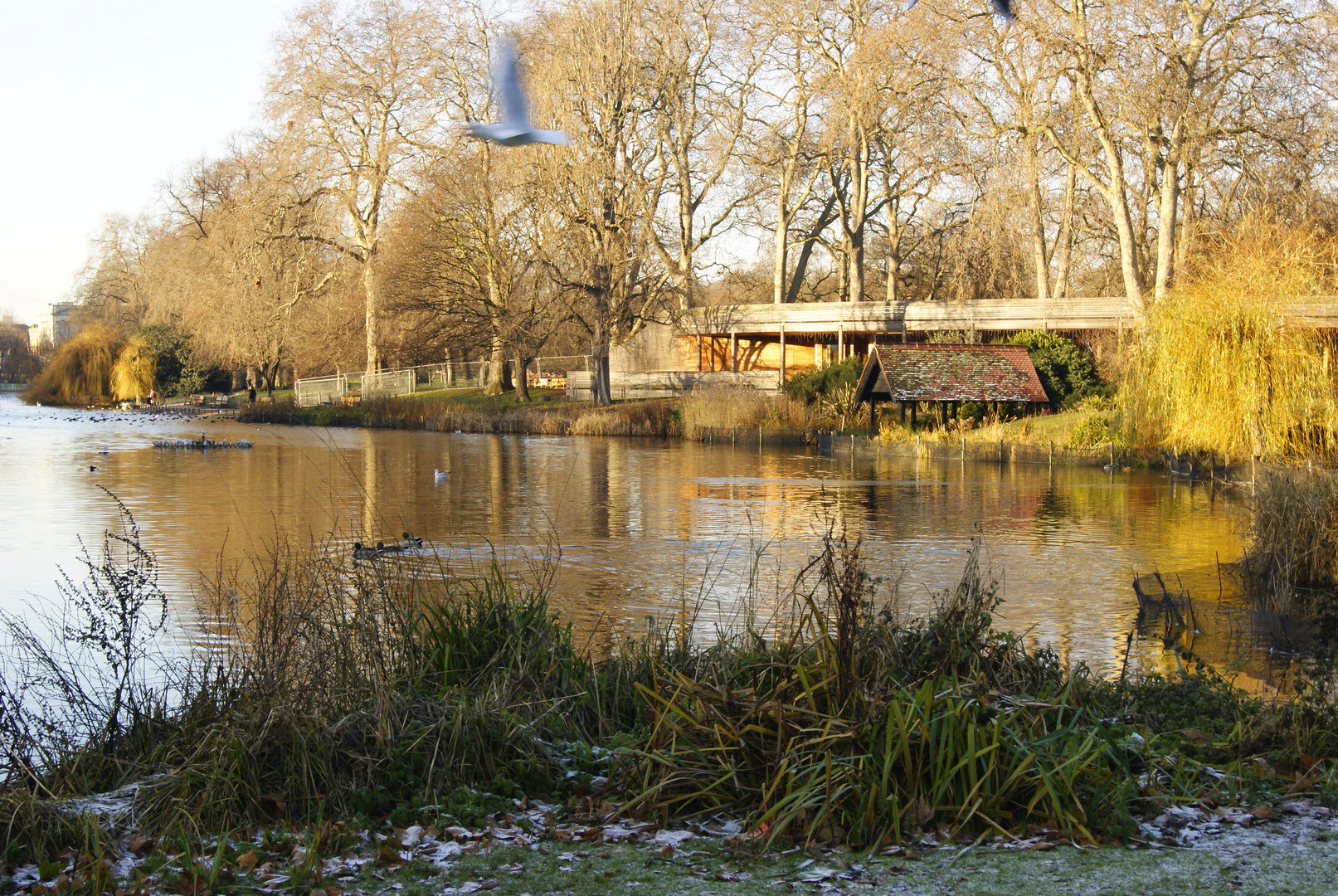 Saint James Park, Londres