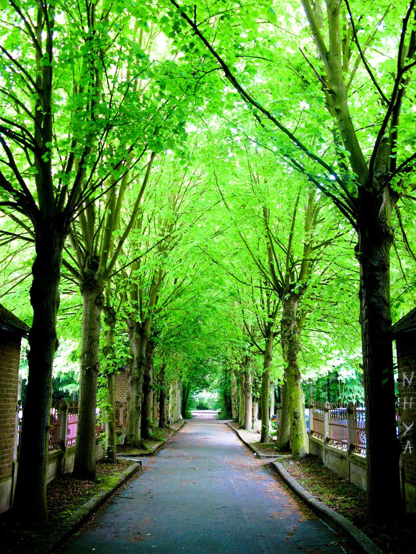 Saint-Luc.
