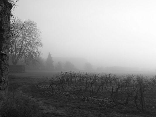 Saint-Nazaire d'Aude sous la brume