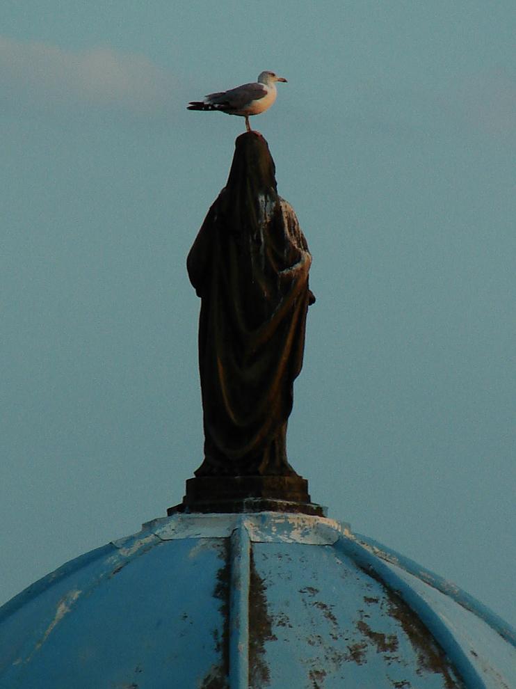 Sainte Mouette