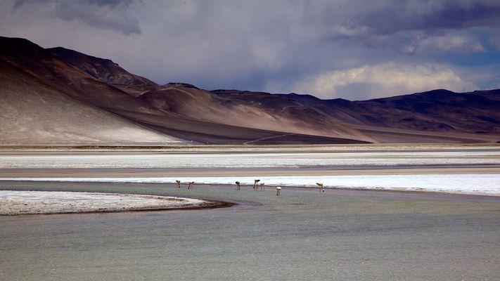 Salar de Talar mit Flamingos, Chile, Atacama Wüste