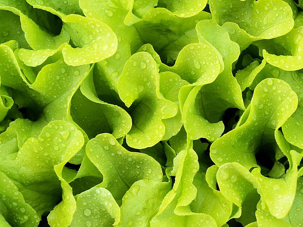 Salat Déco