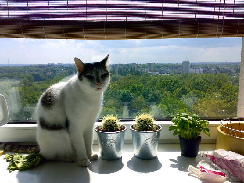 Salat, Kaktus oder doch lieber Basilikum ?!? ...hmmm....