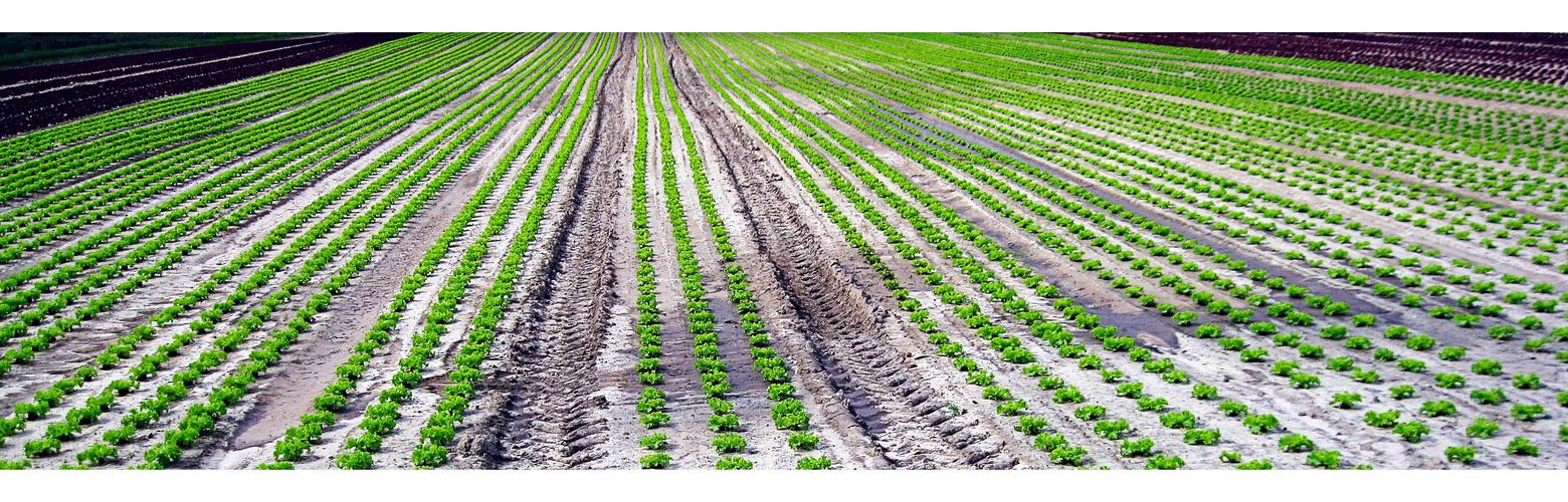 Salat, unendliche Weiten ....