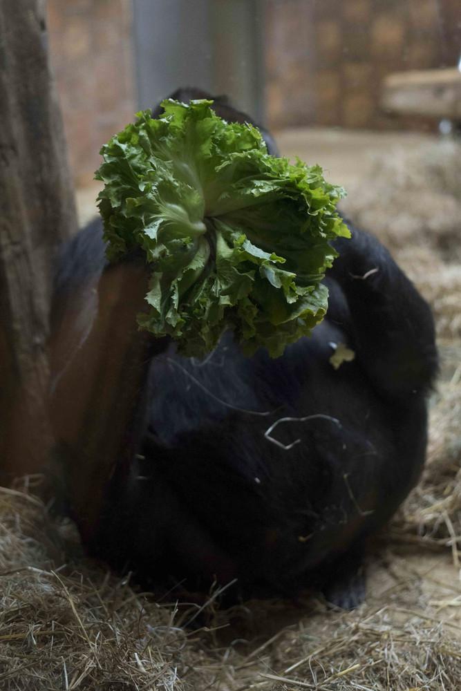 Salat zum Abendessen