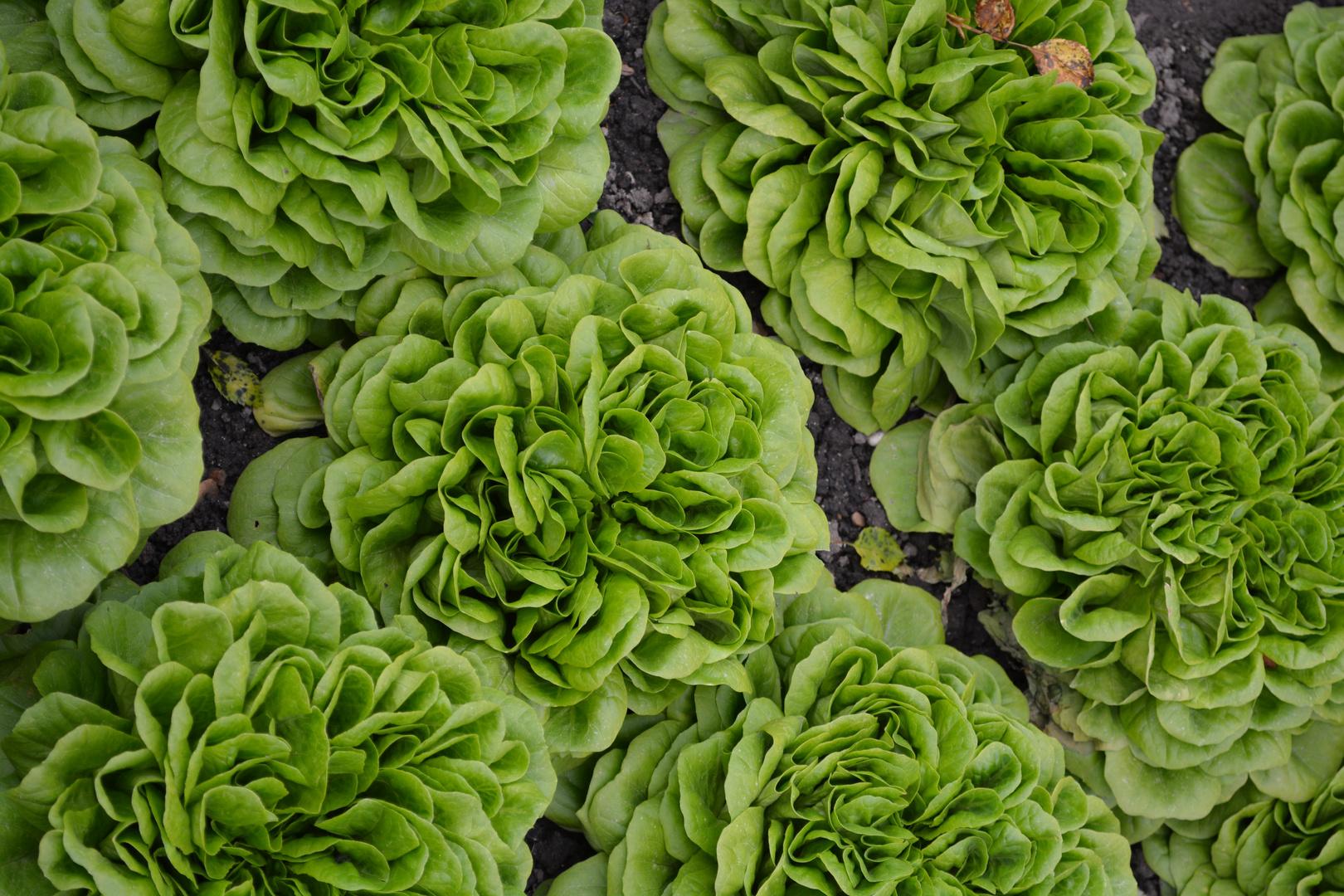 Salatparade