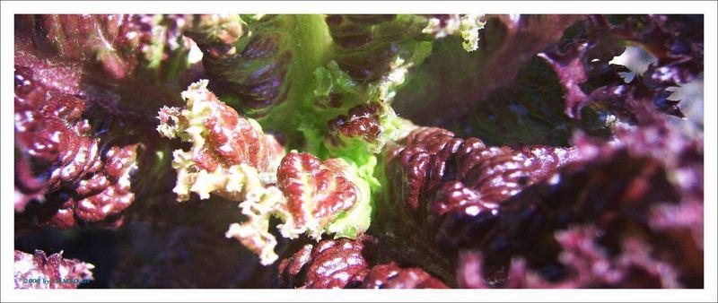 Salatstrukturen