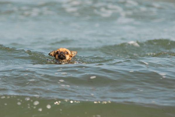 Sally schwimmt im(meer)!