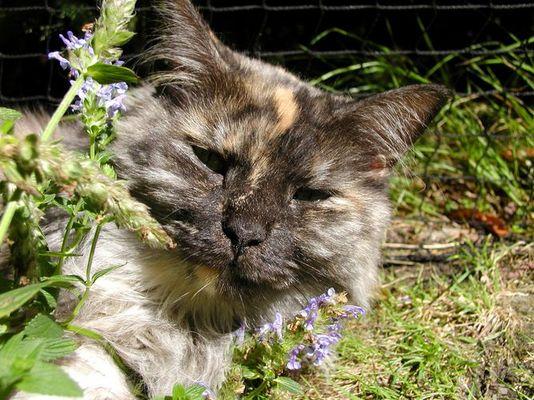 Sally träumt - benebelt von der katzenminze ;-)