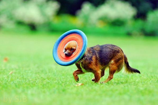 Sally und die Frisbee