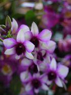 salon des orchidées