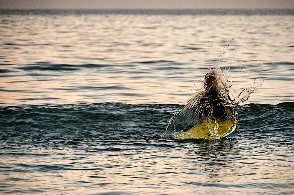 Salpicón de Surfisto