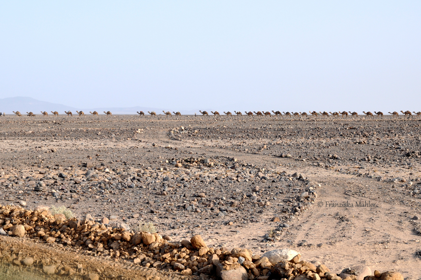 Salt caravans of Danakil