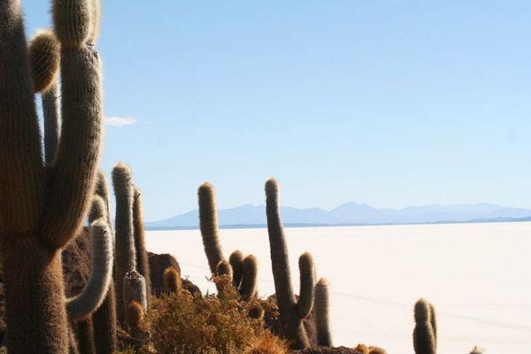 Salty Sea1-Salar de Uyuni