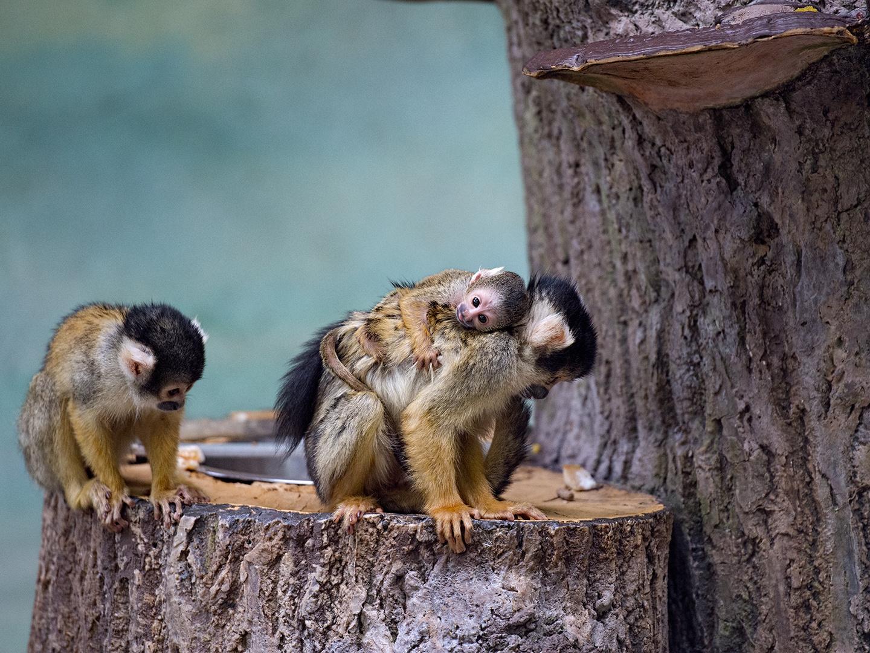 Salzburger Zoo