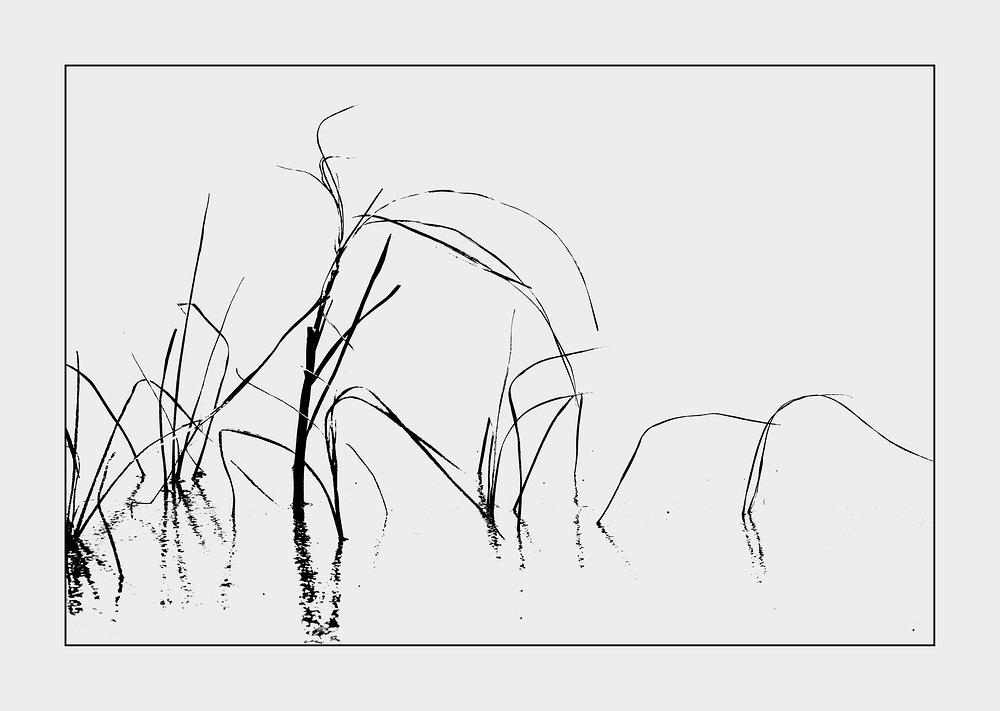 Salzwiese im Eis (2)
