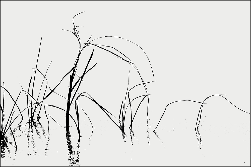 Salzwiese im Eis