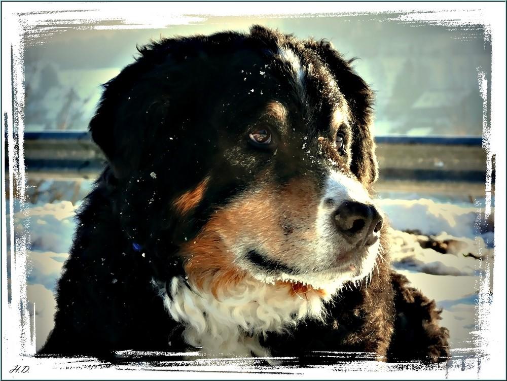 Sam als Schneemann 12.01.2009