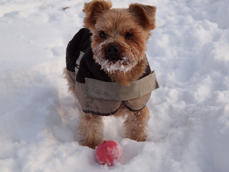 Sam im Schnee