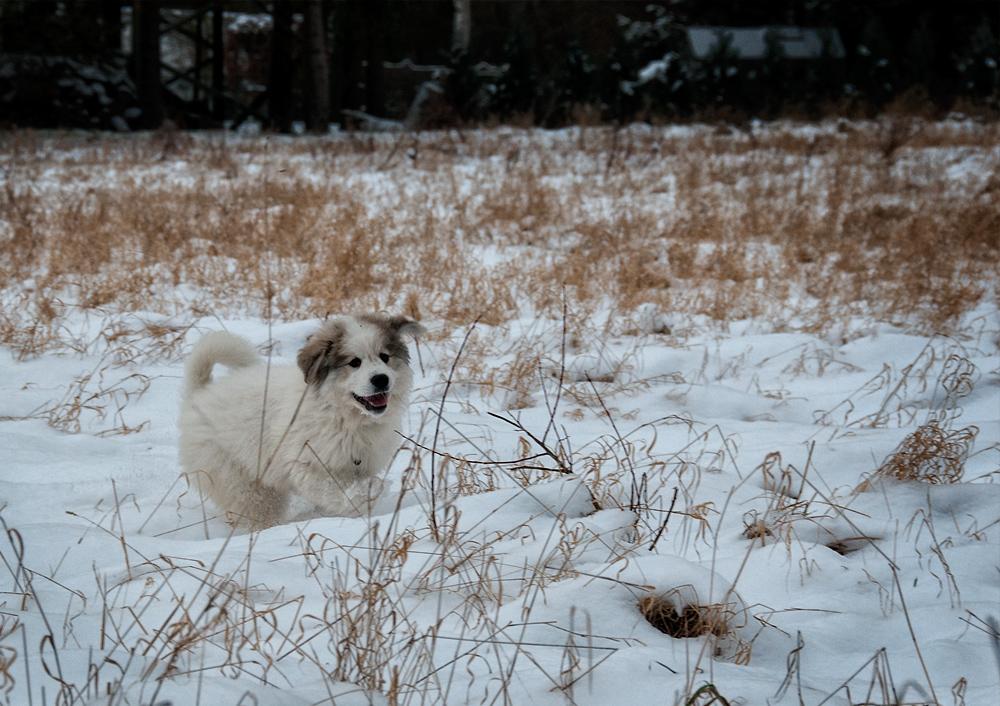 Samantha im Schnee