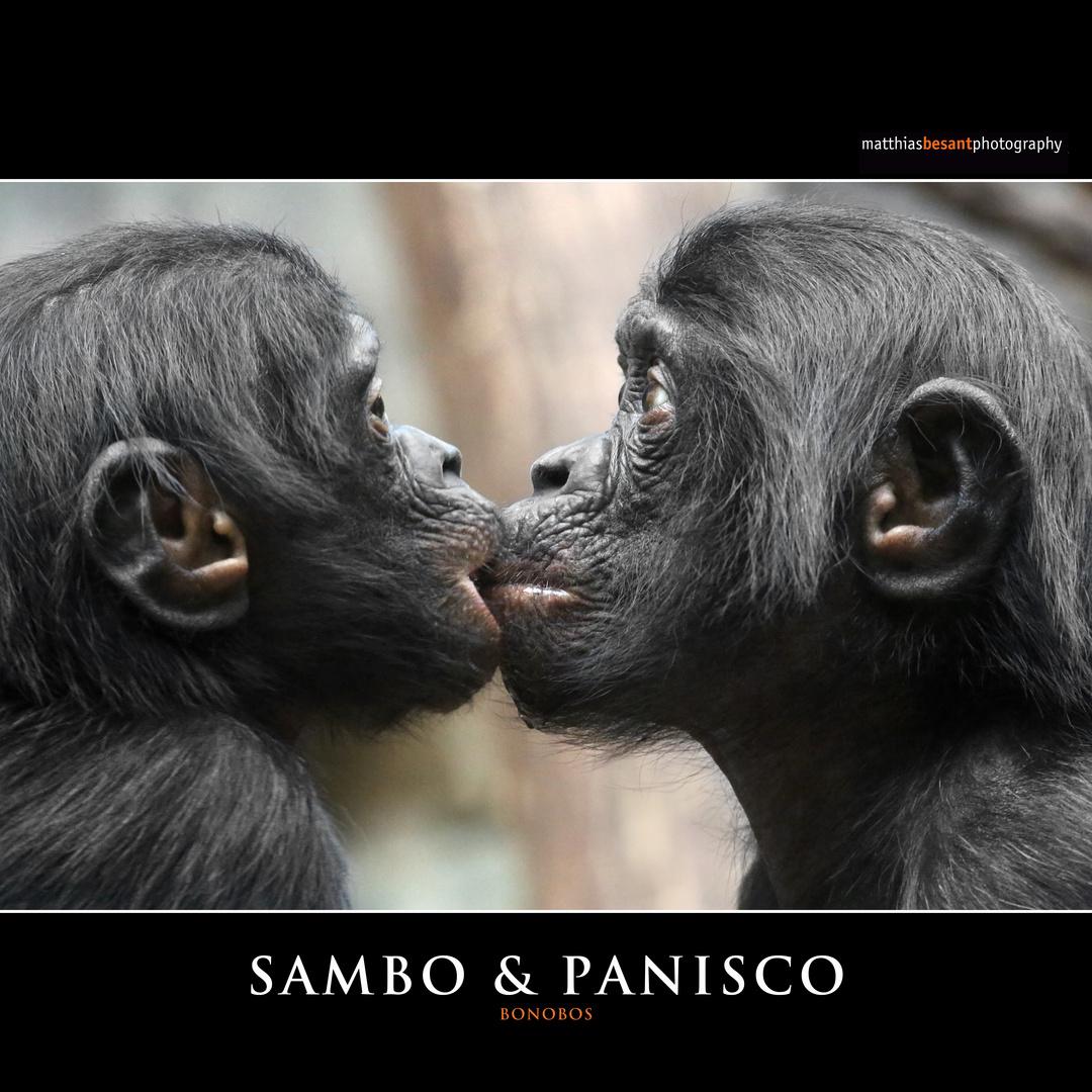 SAMBO & PANISCO
