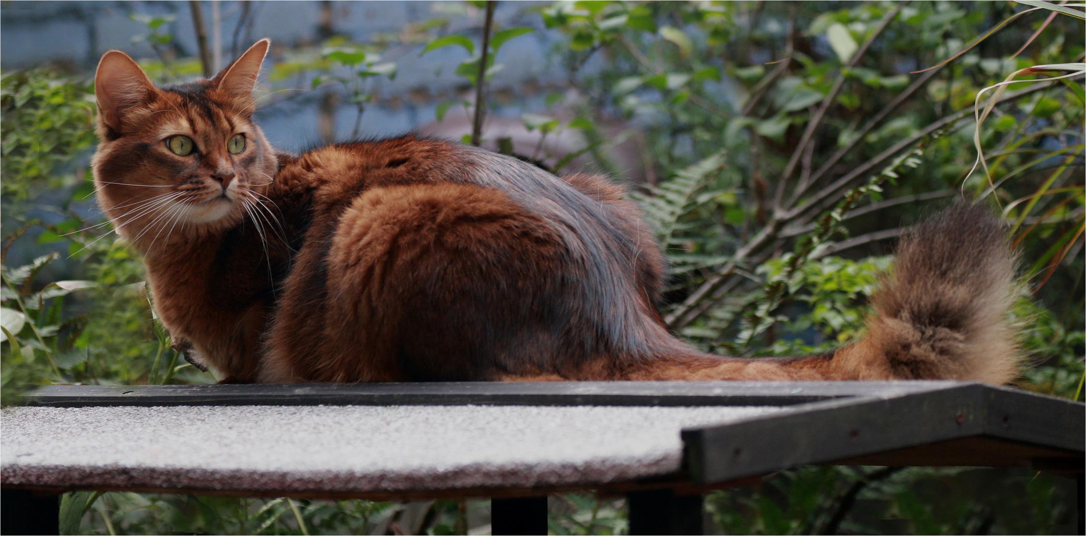Samburu - die Katze auf dem heißen Blechdach ...