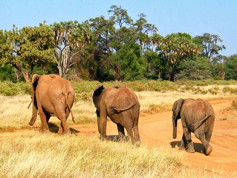 Samburu NP, Kenia