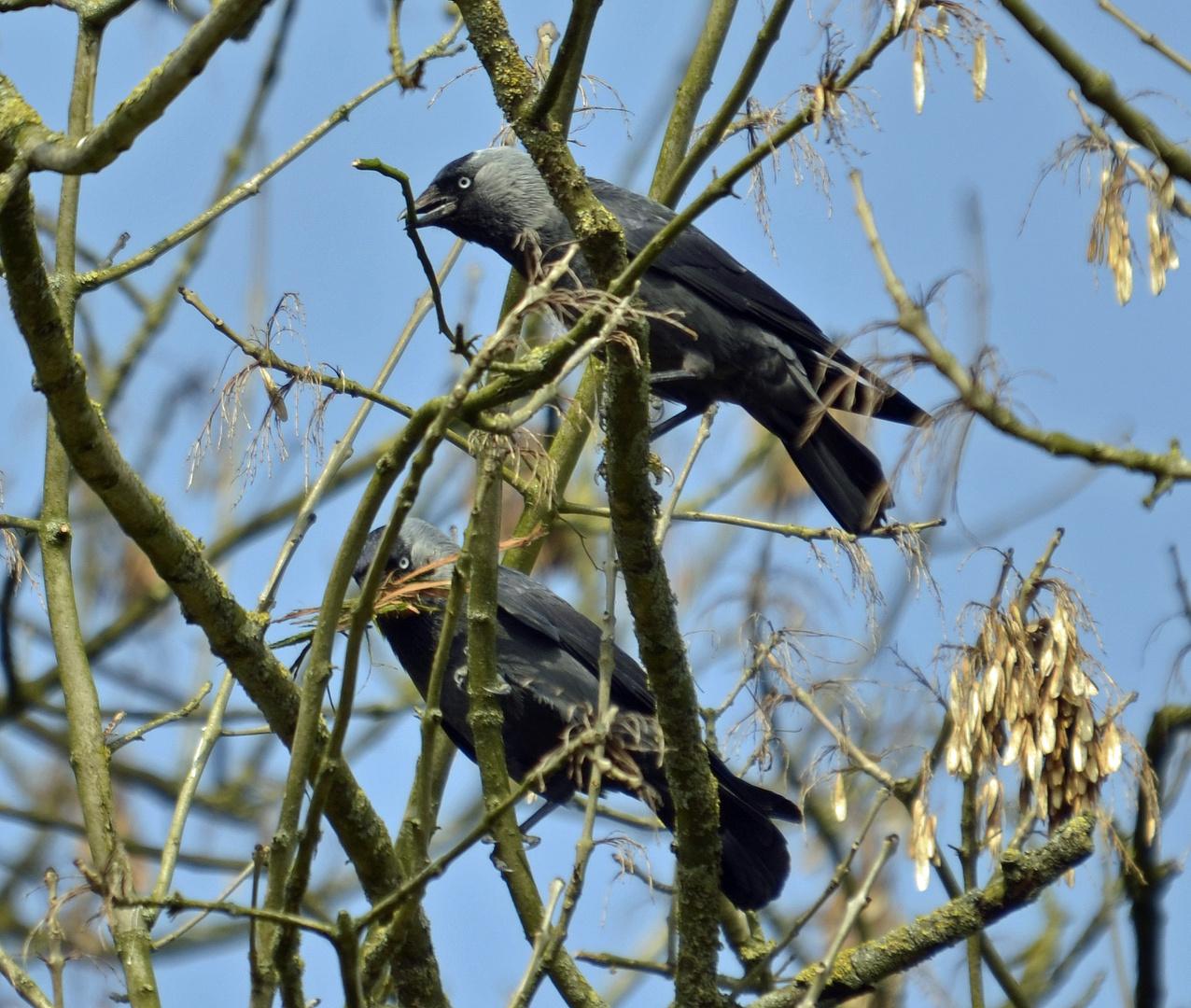 Sammeln für den Nestbau