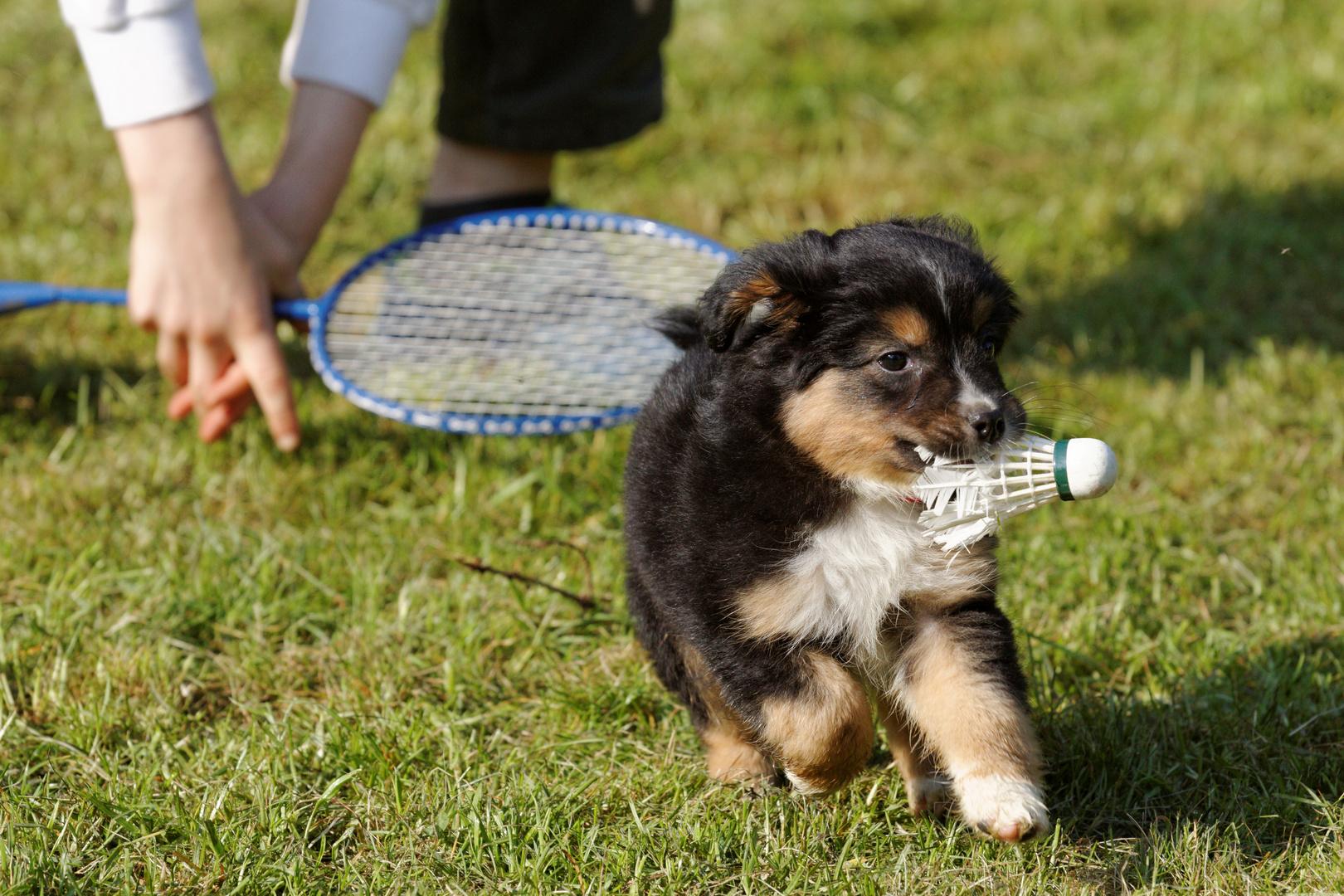 Sammi spielt Badminton