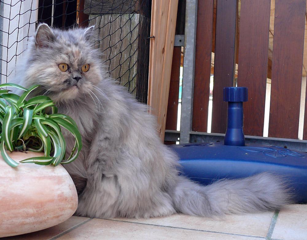 Sammy auf dem Balkon