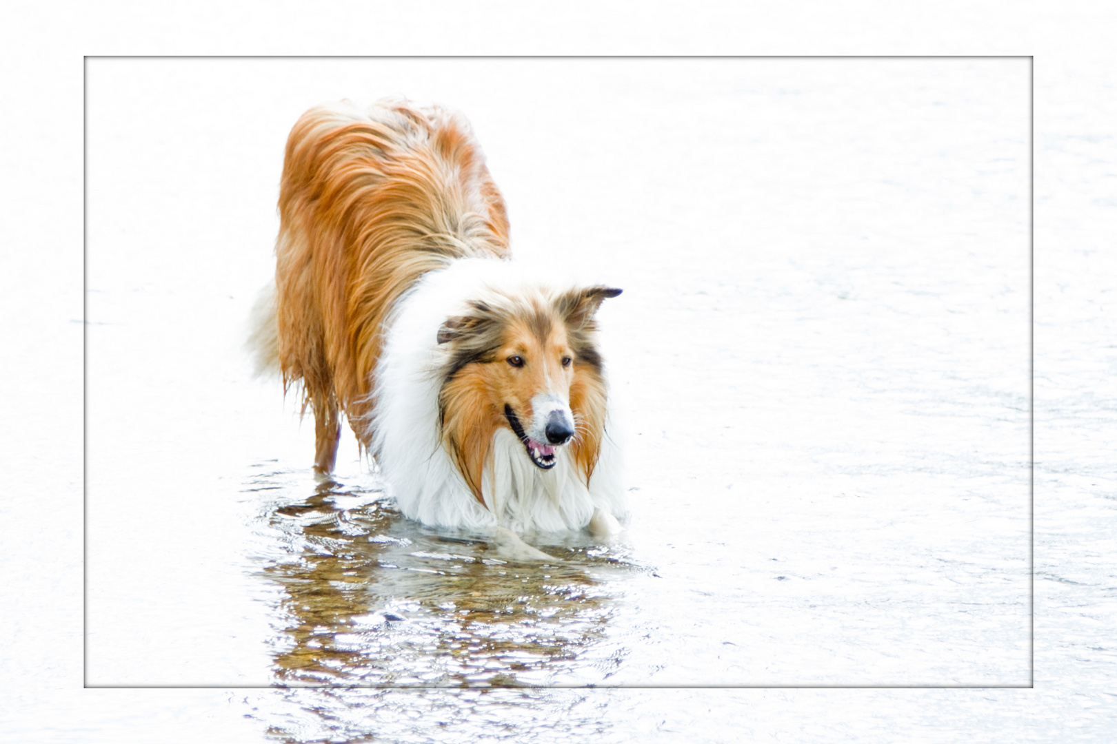 Sammy im Rhein