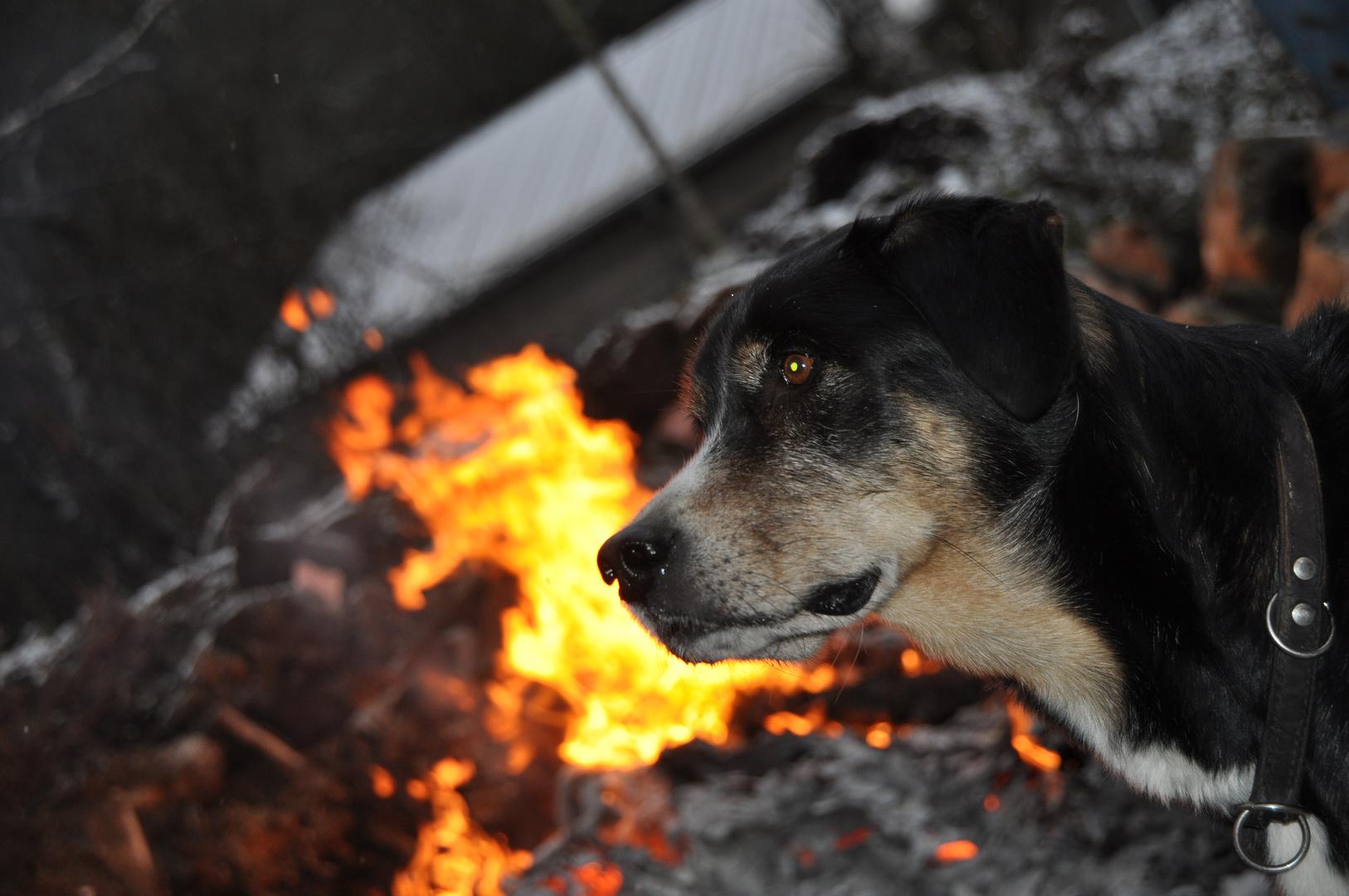 Sammy on Fire