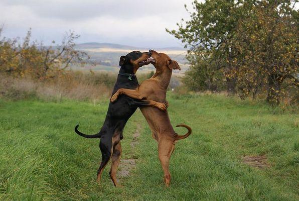 Sammy und Freund