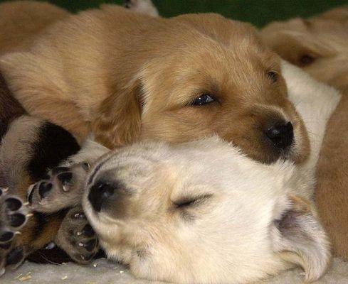 Sammy und Greta