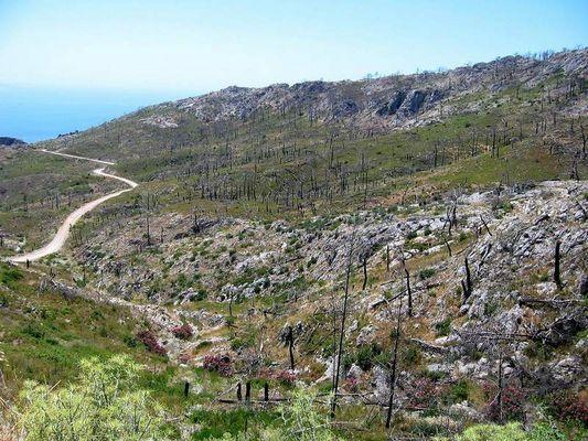 Samos Bergland nach den Waldbränden