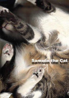 Samson the Cat