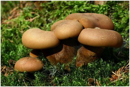 Fungi & Lichens