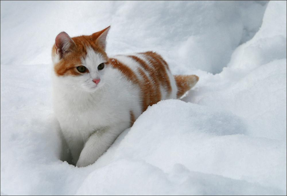 samtpfote im schnee