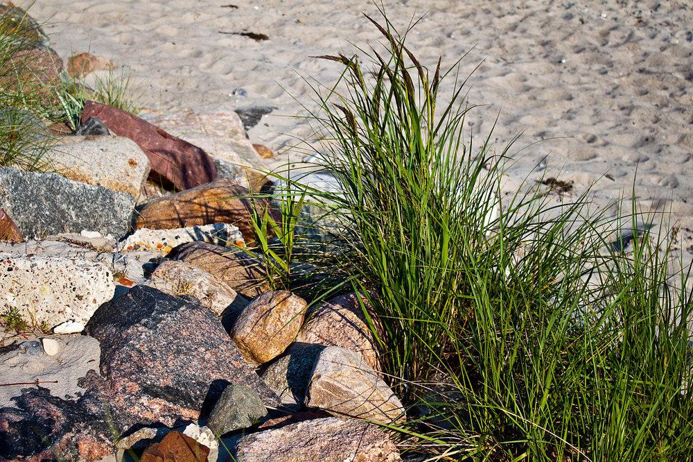Sand-Schilf-Steine