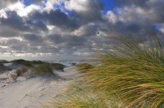 Sanddünen auf dem Deich