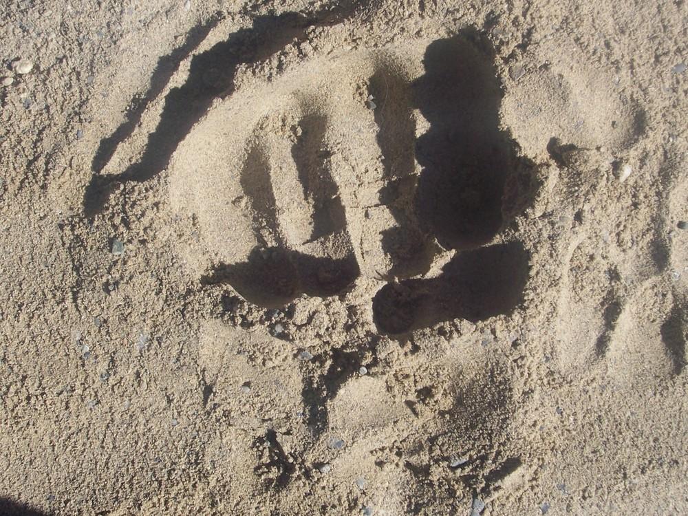 Sandfaust