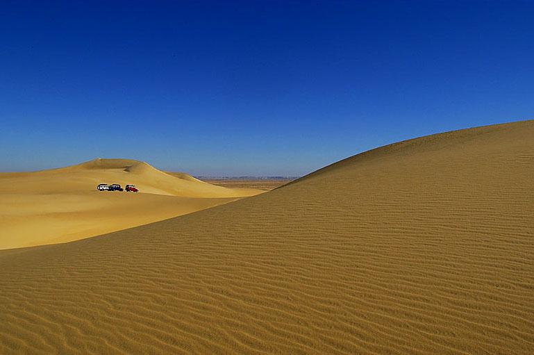 Sandflöhe