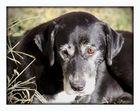 Sandra's Old Farm Dog.........