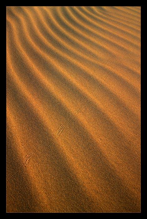 Sandrippel, Chongorin Els, Gobi, Mongolei