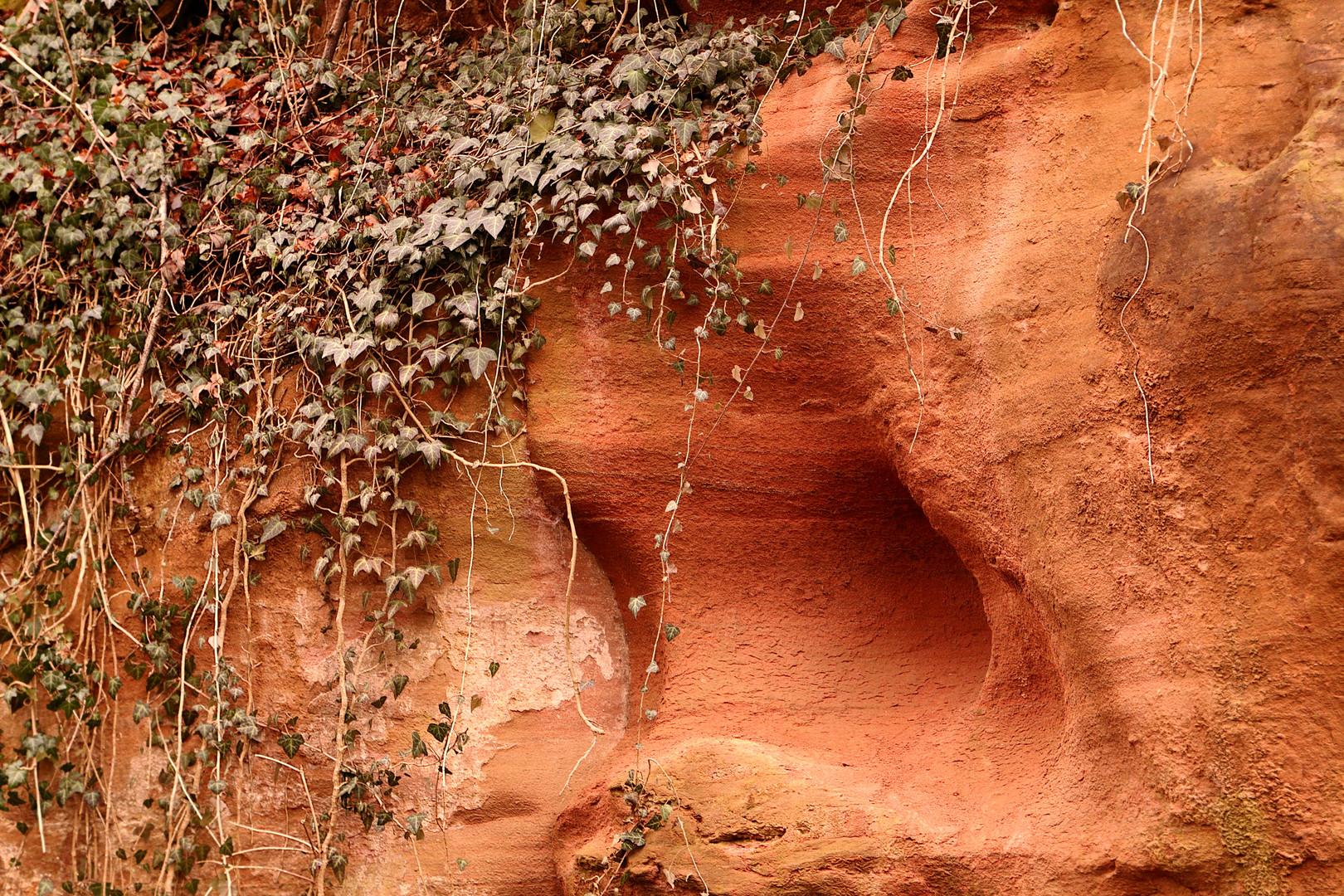 Sandstein mit Efeu