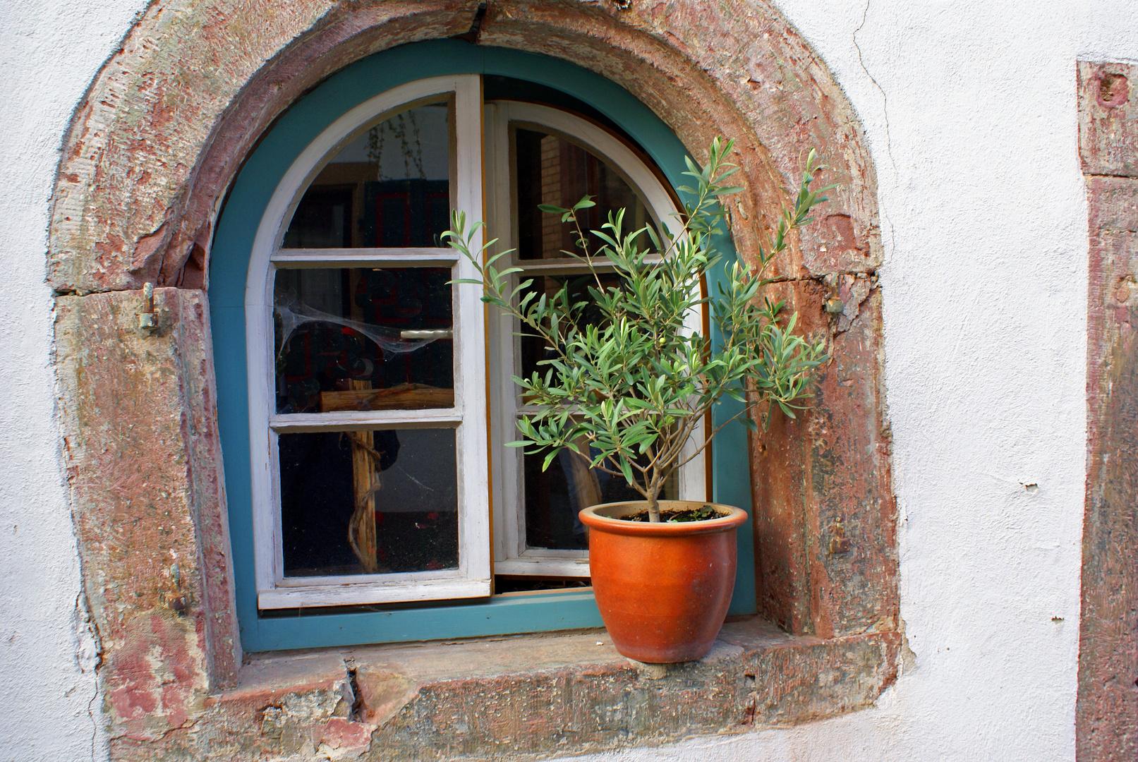 Sandsteinfenster mit Olive