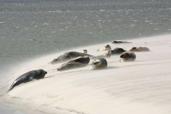 sandstorm at the seals