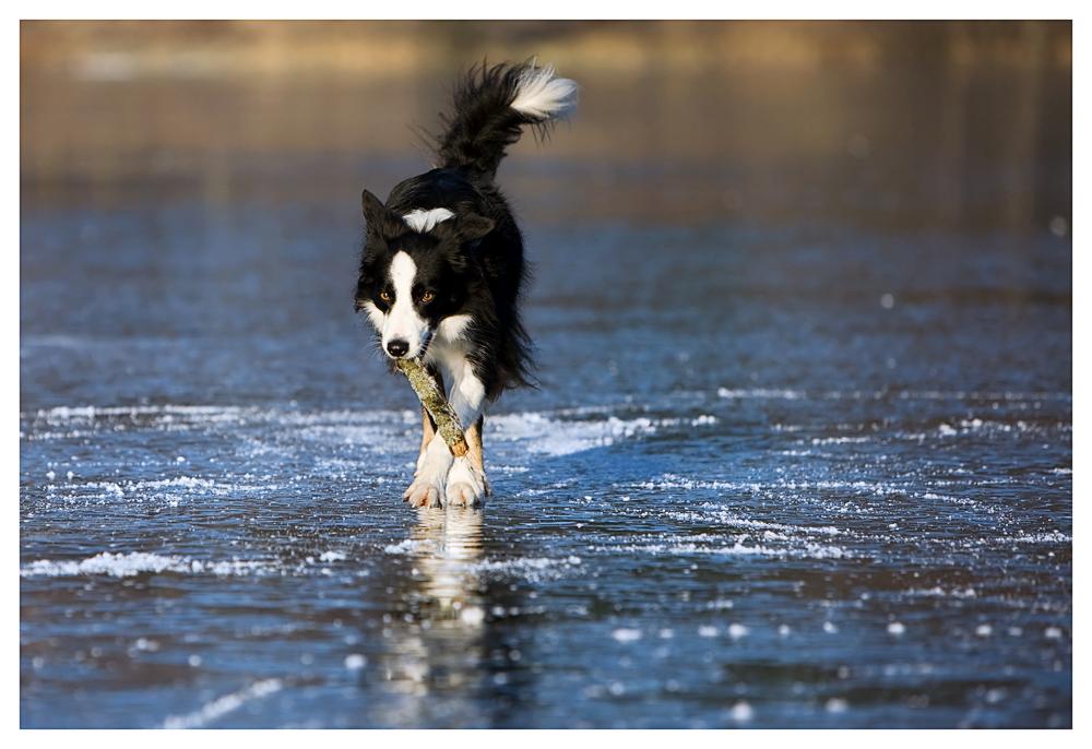 Sandy mal wieder auf dem Eis