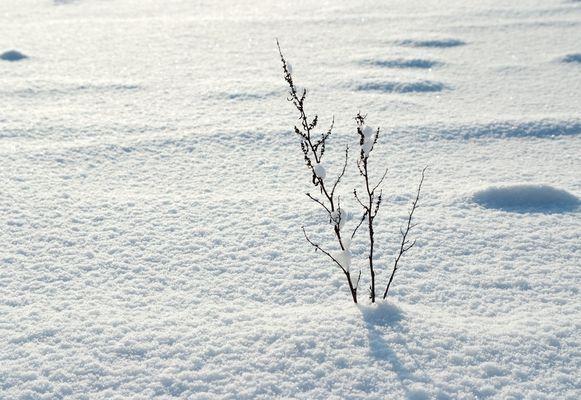 sanft liegt das Moor unter dem Schnee