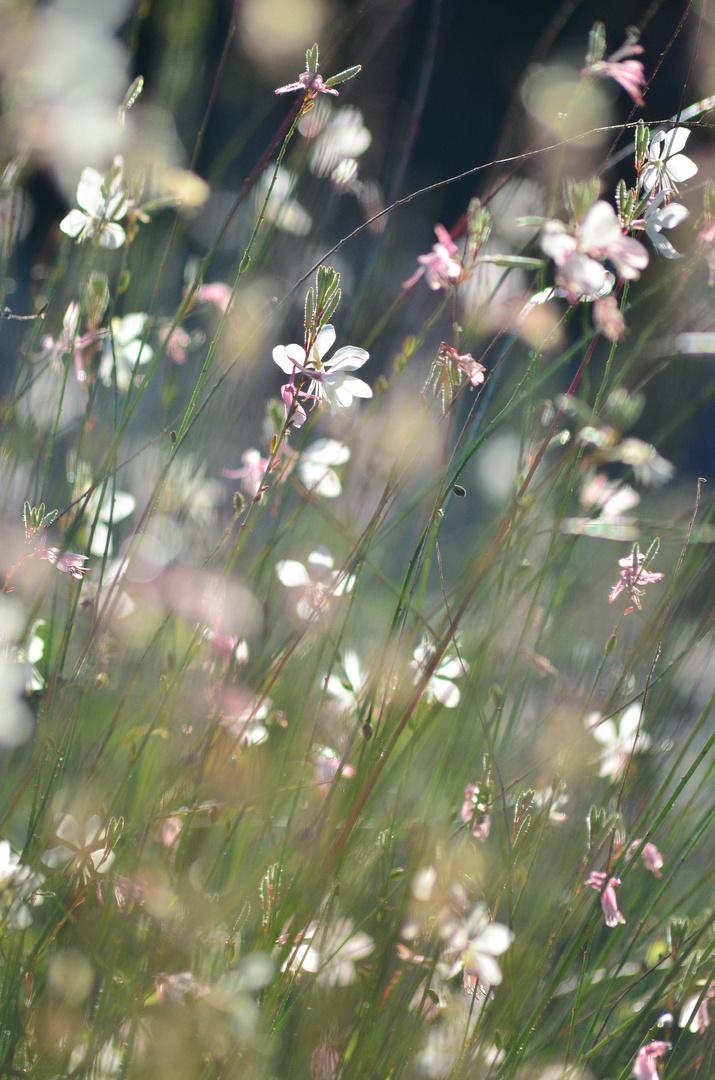 Sanfte Blüten